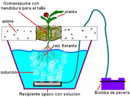 verdurahidroponica